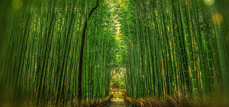 Bamboo used as Building Material