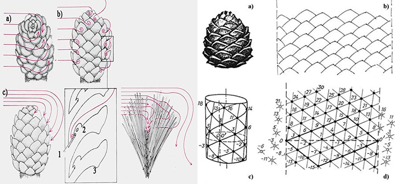 Biomimicry Inspired Fa U00e7ades  U0026 Computational Design